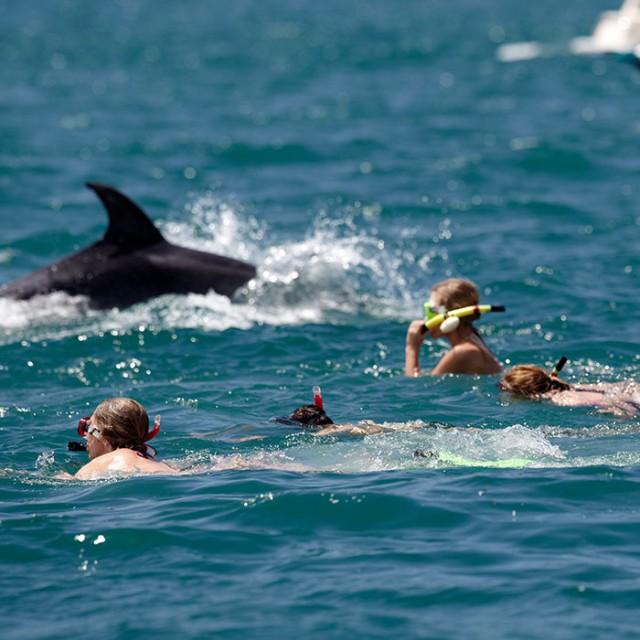 Dolphin Eco Experience