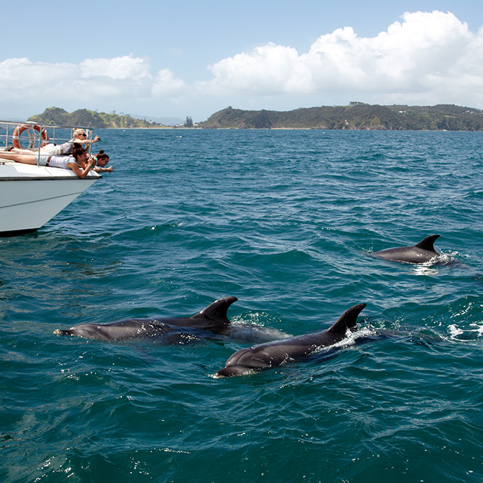 Dolphin Eco viewing dolphins G4